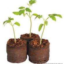 Нетрадиционные способы выращивания рассады