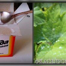 Сода в огороде – советы дачникам как применять
