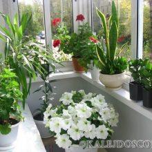 Всего 2 ингредиента – и Ваши комнатные растения будут расти намного лучше