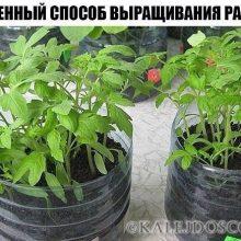 Упрощенный способ выращивания рассады.