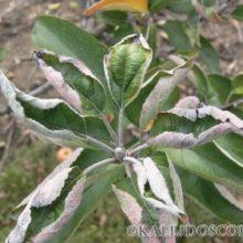 Топ-10 самых частых причин, почему на растениях скручиваются листья