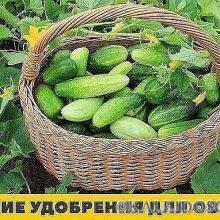 1.Хлебная закваска для огурцов